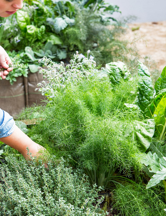 living tips for growing a healthy herb and vegetable garden - Live Garden